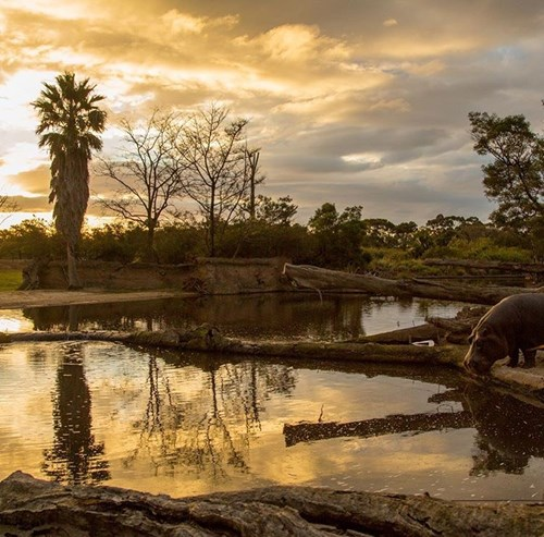 Werribee Zoo Sunset