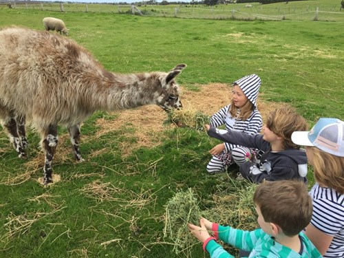 Feeding animals at Basils Farm